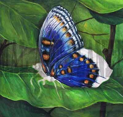 Как рисовать бабочку акриловыми красками