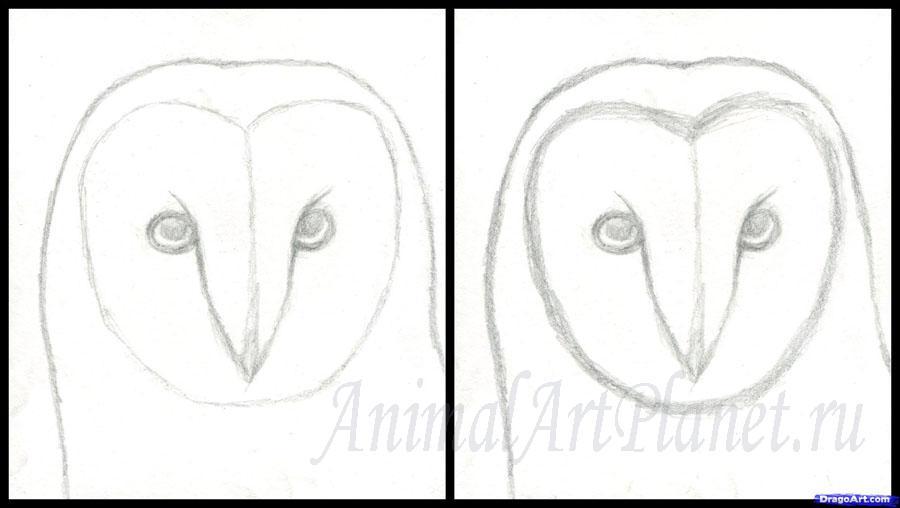 как рисовать сову карандашом поэтапно для начинающих термобелье нового